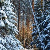 Зимняя сказка 1 :: Николай Варламов