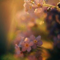 Цветочки на закате :: Kamilla Gazizova