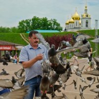 Кормёжка голубей. :: Виктор Евстратов