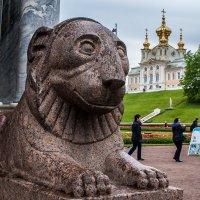 Добрый лев :: Анатолий Мигов