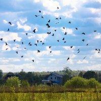 Птицы над полем :: Денис Матвеев