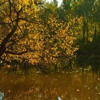 Осенний этюд :: Денис Масленников