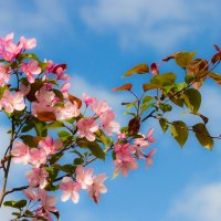 Цветы и небо :: Михаил Барамович