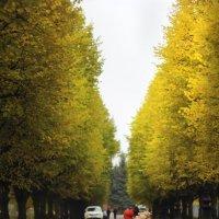 Осень :: Александра Печорина