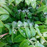 Листья после дождя :: Елена Брыкова