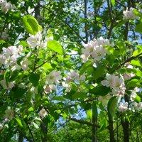 Солнечное цветение :: BoxerMak Mak