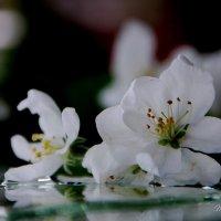 Яблоневый аромат :: Татьяна Аистова