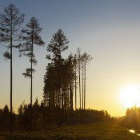 Ural Tree 2 :: Ринат Валитов