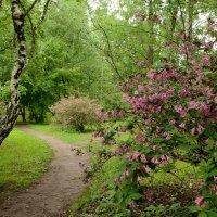 Московский ботанический сад :: Ирина Н