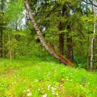 Май 2015 (на лесной поляне) :: Милешкин Владимир Алексеевич