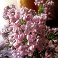 Сиреневый цвет :: Елена Семигина