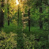 Пробилось солнце сквозь листву... :: Лесо-Вед (Баранов)