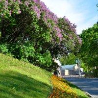 На цветущей улице :: Miola