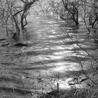 Вода :: Ananasik XI