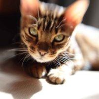 Кот и лизнбэби :: Мария Разоренова