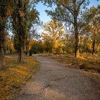 Осенняя аллея. :: Геннадий