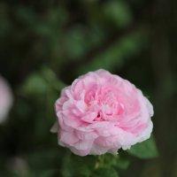 Цветочный хоровод-59. :: Руслан Грицунь