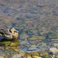 Водные процедуры при солнечной погоде... :: Tatiana Markova