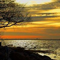 Залив вечером :: Николай Танаев