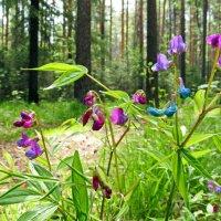 В весеннем лесу :: Юрий Кузмицкас