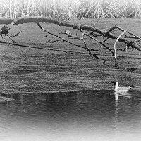 Одинокая чайка :: Вадим Sidorov-Kassil