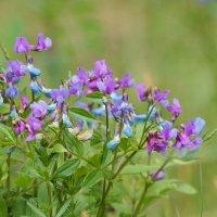 лесные цветы :: Михаил Фролов