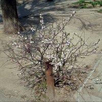 Лёгкое дыхание весны :: Нина Корешкова
