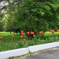 Весенние цветы :: Denis Aksenov