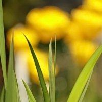 Трава - среда, где вырос он. :: Владимир Гилясев