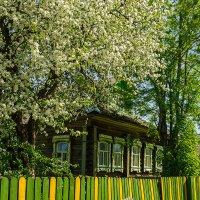 цветущий месяц май :: Galina