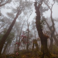 Туманный лес :: Atuan M