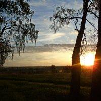 Рассвет в берёзках. :: Сергей Кунаев