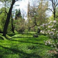 В Ботаническом саду. :: ТАТЬЯНА (tatik)