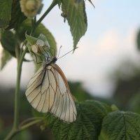 Бабочка :: Наталия Носова