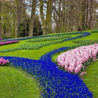 Tulips in Holland 04-2015 (19) :: Arturs Ancans