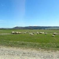 Пастух и овцы :: Наталья Джикидзе (Берёзина)
