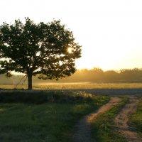Утро :: Sage Ekchard
