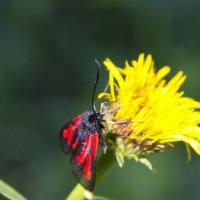 цветок и бабочка :: Олег
