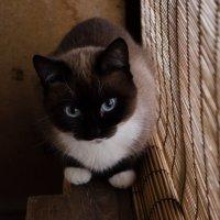 моя кошка :: Анна t04ka