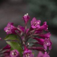 Цветы :: Андрей Бойко
