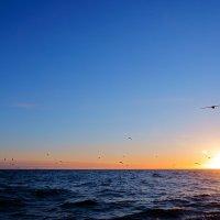 Закат в море :: олег