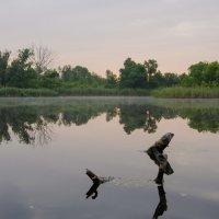Ранняя тишина... :: Ксения Довгопол