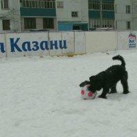 Мяч и лапы :: Сергей Воронков