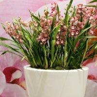 розовый цвет флористов :: Олег Лукьянов