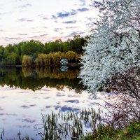 Spring :: Sergey Sergaj