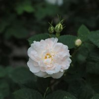 Цветочный хоровод-77. :: Руслан Грицунь