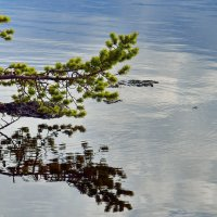Река Ура. :: kolin marsh