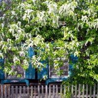 Весна! :: Олег Петрушов