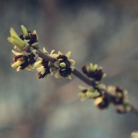 Весна2 :: Дарья Шевцова