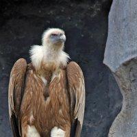 Чисто конкретный птиц :: Alexandr Zykov